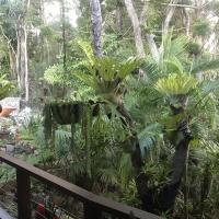 Tropical_Garden_holiday_house_sunshinecoast