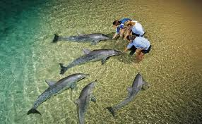 dolphine feeding