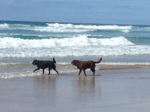 Dog friendly beach Coolum
